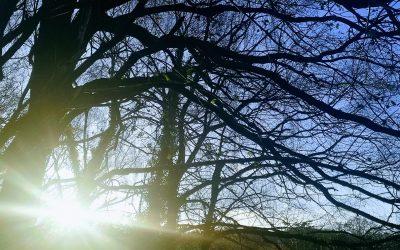 Winter solstice yoga workshop